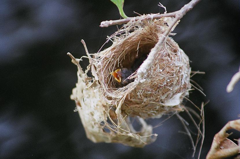 Putni nepamet savu ligzdu ja... Autors: HotAsFire Visvisādi fakti.