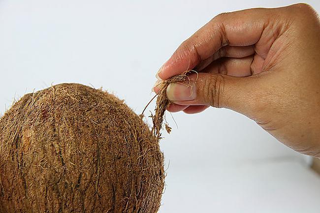 Norauj nost brūnos... Autors: plunkš Kā iegūt kokosrieksta skaidiņas?
