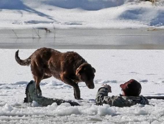 Kāds 60 gadus vecs vīrietis... Autors: Kačuks123 Pārsteidzoši stāsti par suņiem